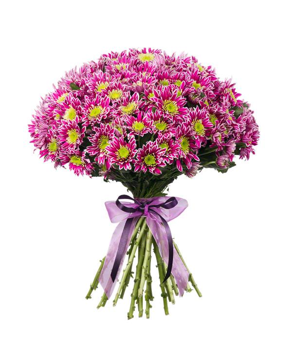 Цветы хризантемы букеты