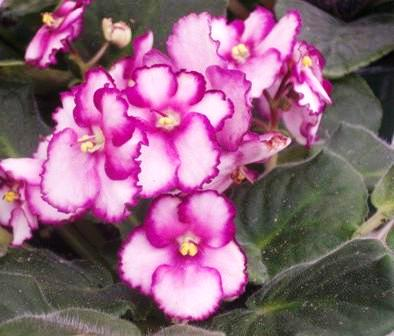 Каталог цветов : названия и фото, описание цветов, виды и сорта