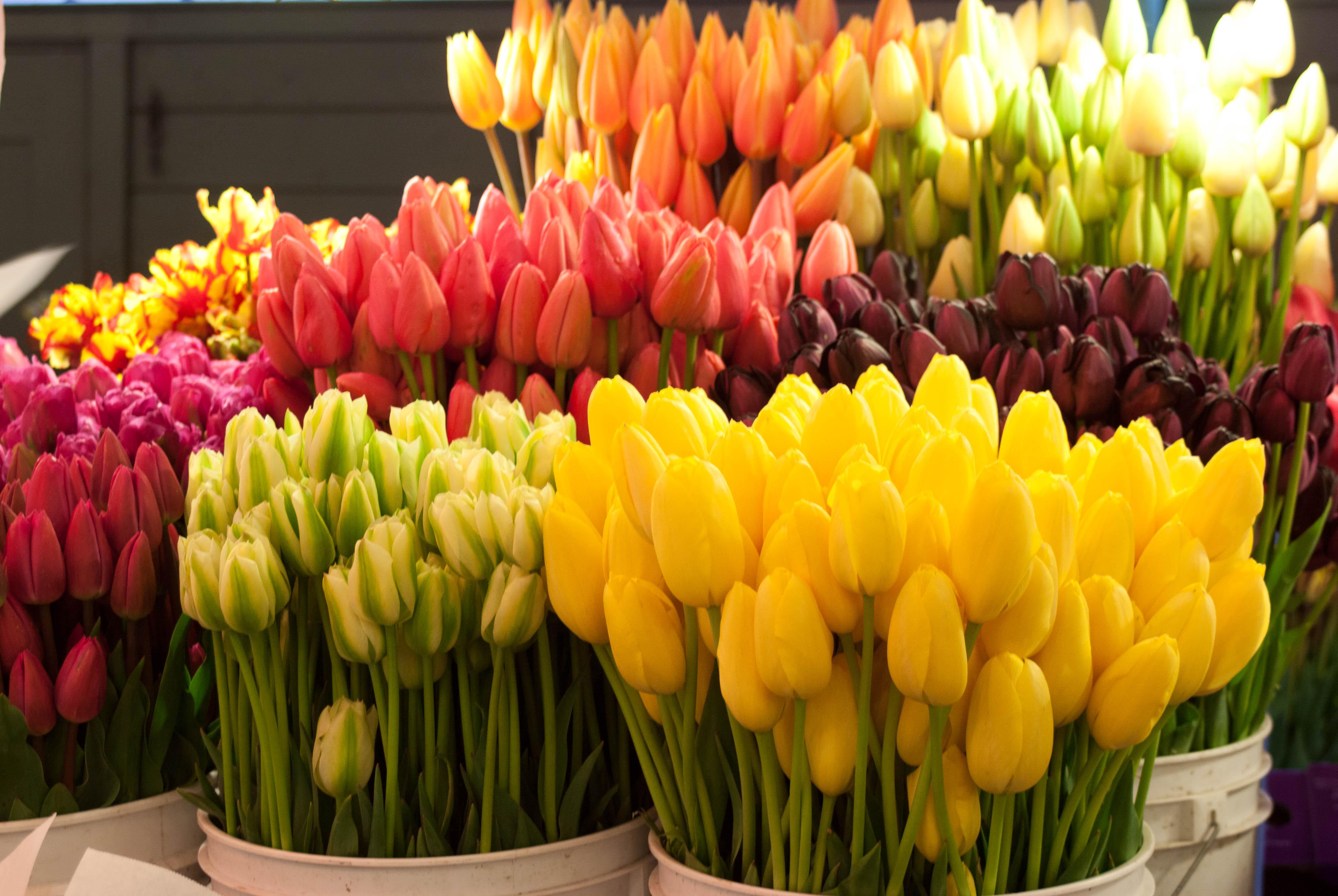 цветы на восьмое марта фото значительное