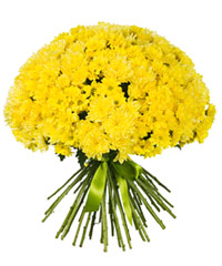 """Огромный букет из хризантем """"Торжество солнца"""" с доставкой по Калининграду"""